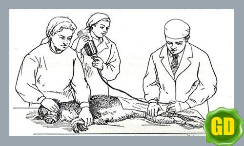 раны у собак