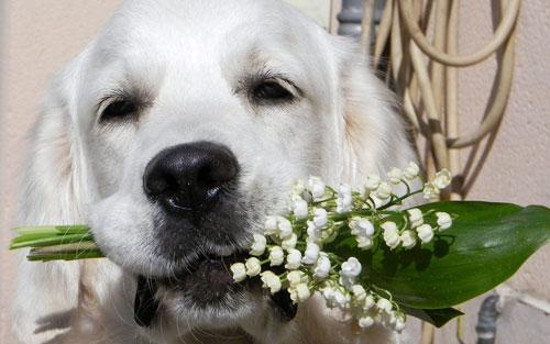собака со цветами