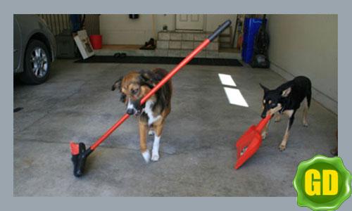 собаки помощники человека