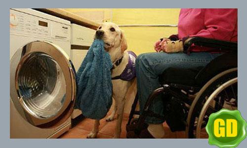 собаки помогают людям