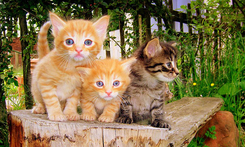 cat-zavesti