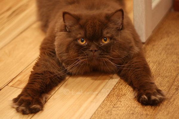 Кастрация кота. Плюсы и минусы