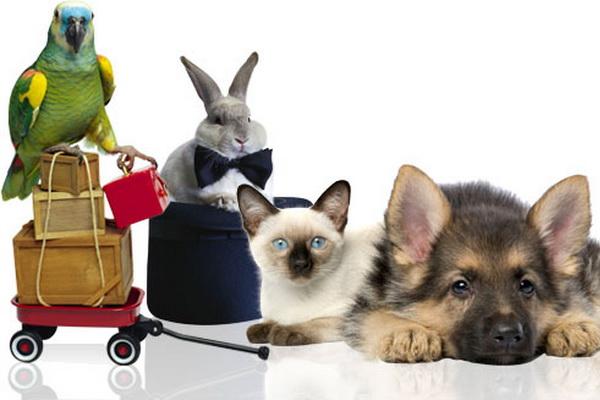 Ethereum Pet Shop  Your First Dapp  Truffle Suite