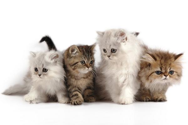 Какими бывают кошки