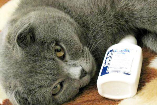 Чем лечить кота от насморка в домашних условиях - Поселок Лесной родник