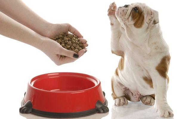 Какой корм для собак лучший?