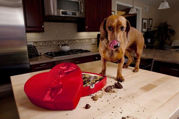 Азы кормления собаки