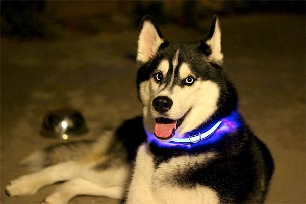 Подбор ошейника для собаки