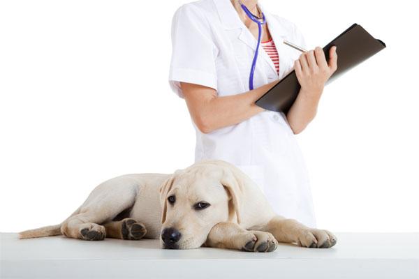 Травма глаза у собаки - как лечить