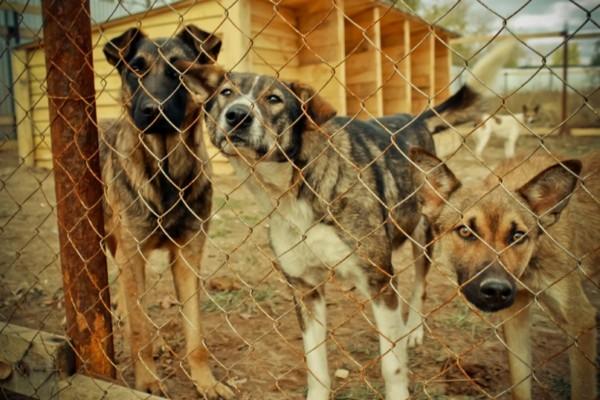 Реализация управленческого консалтинга в приютах для собак