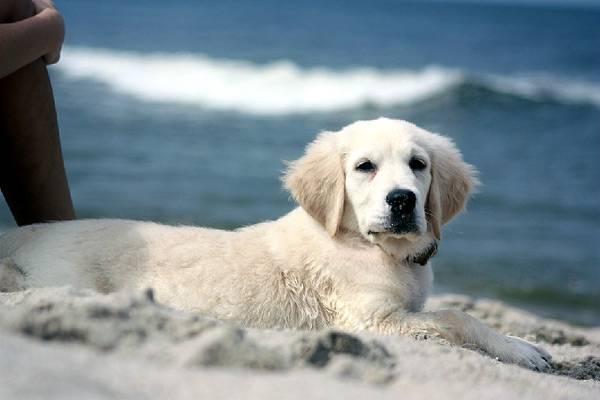 Для чего стерилизуют собак?