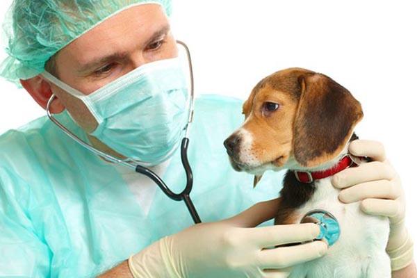 Интересное Проблемы с репродуктивными органами животного. Здоровые животные без лекарств.