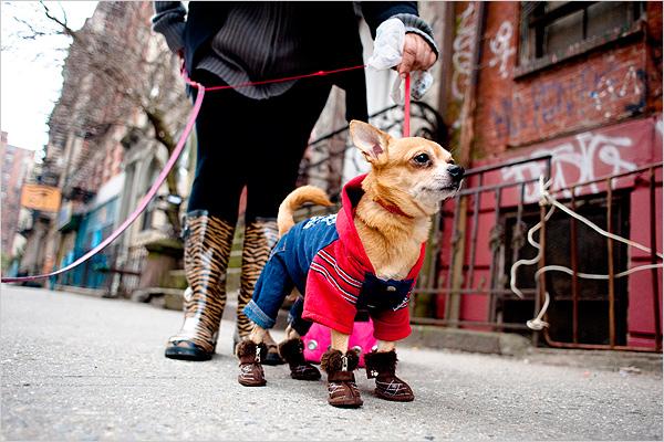 подобрать одежду для собак