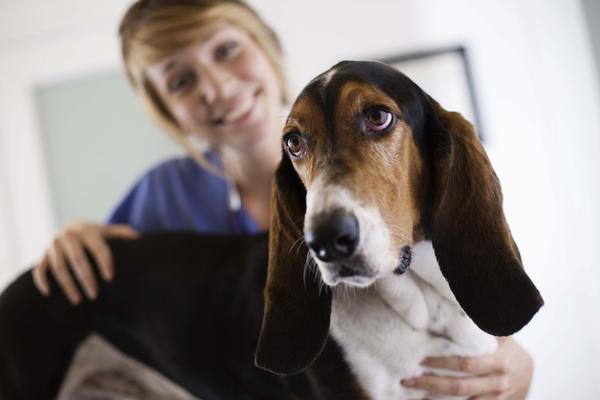 Где оказывают качественную ветеринарная помощь?