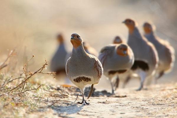 Разведение птицы