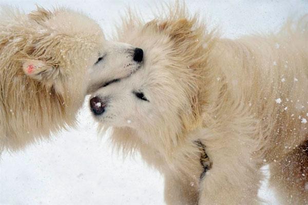 Как вылечить энтерит у собак?