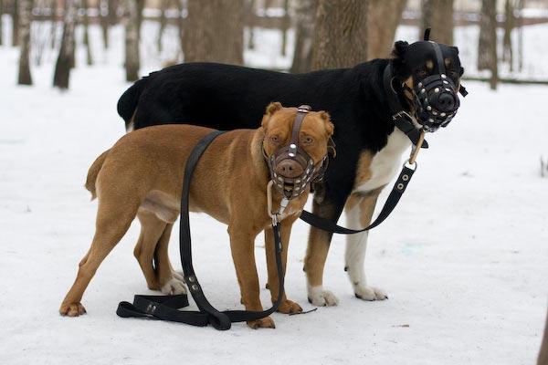 Как правильно выбирать собачий намордник?