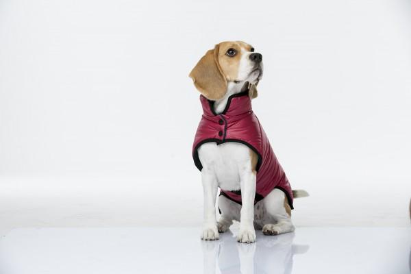 Одежда для собак. Мода или необходимый атрибут?