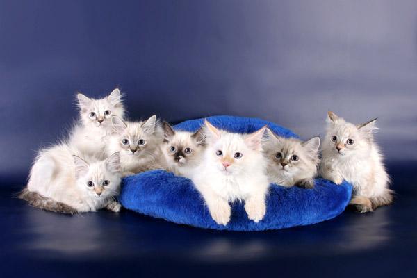 Как правильно подобрать корм для кошки?