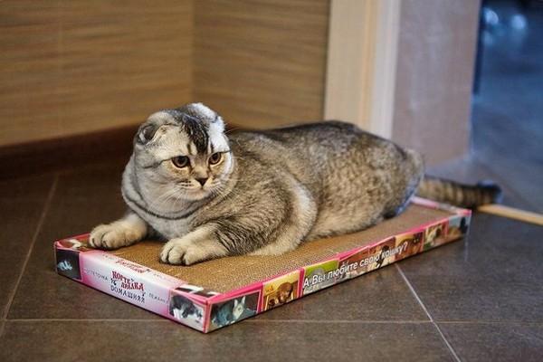 Выбираем когтеточки для кошек