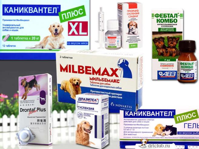 Препараты для дегельминтизации собак