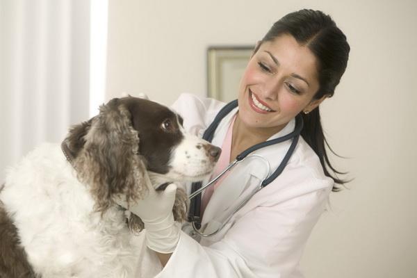 Опухоли молочных желез у собак - как спасти домашнего питомца?