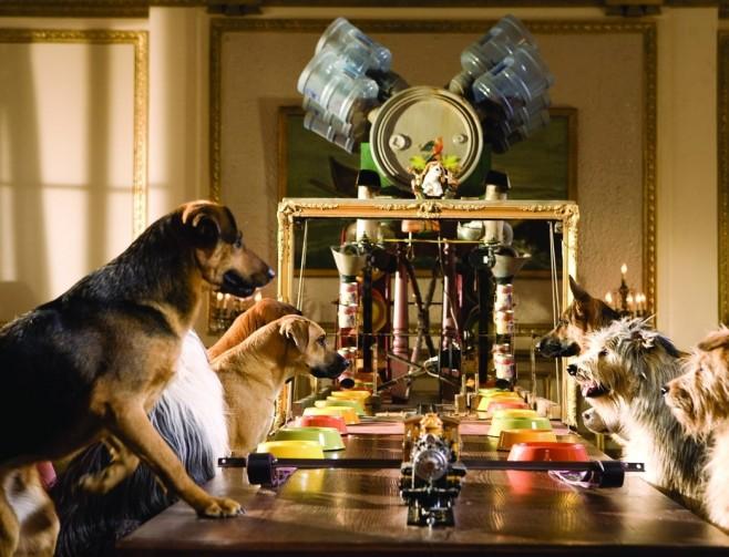 3 важных совета о воспитании и дрессировке собак