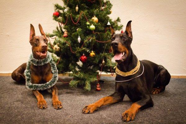 Бесконфликтная дрессировка собак