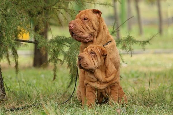 Какую породу собаки выбрать?