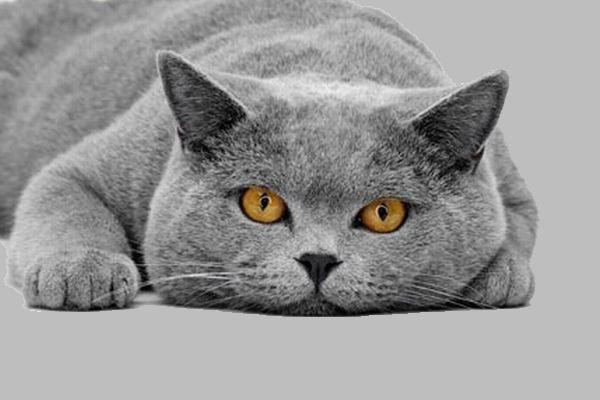 Как ухаживать за кошками и собаками