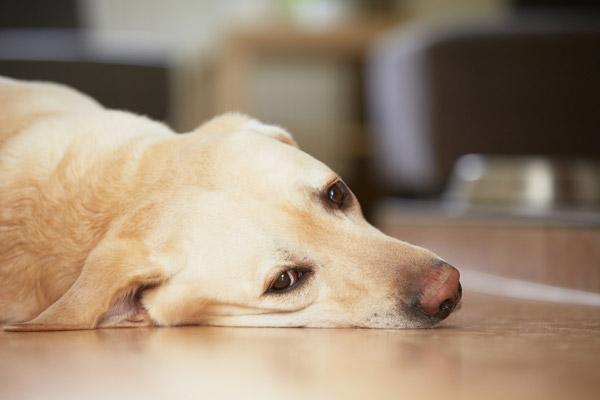 Выявление онкологических заболеваний у собак