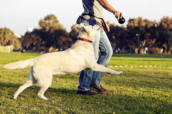 Книги для воспитания собак