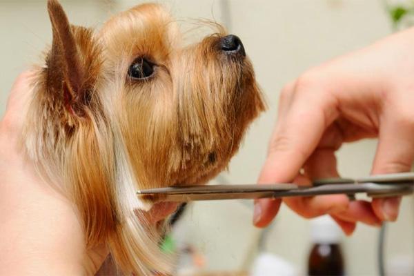 """""""Городские пижоны"""": стрижка и мытье домашних животных"""
