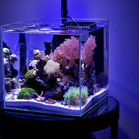 Запуск аквариума – пожалуй, самый ответственный момент