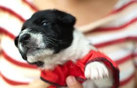 Как заботиться о вашем щенке