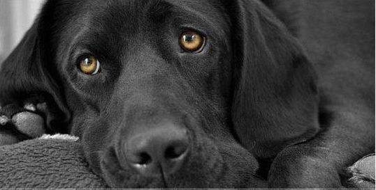 Лечение отравления собаки крысиным ядом- первая помощь, симптоматика