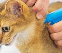 Ветеринарная клиника- услуга чипирования животных