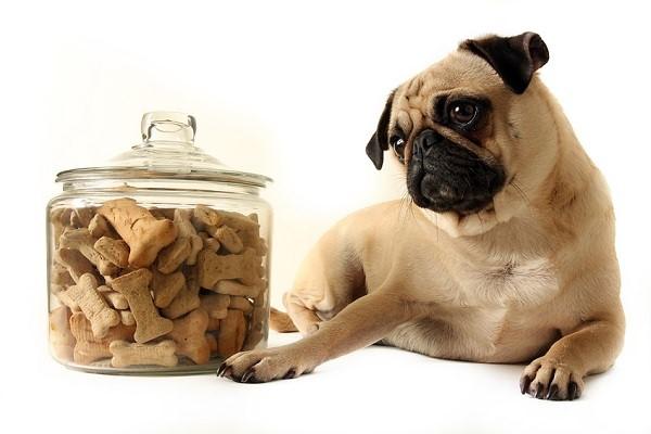 Выбираем сухой корм для собак
