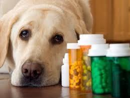 Bитамины для собак