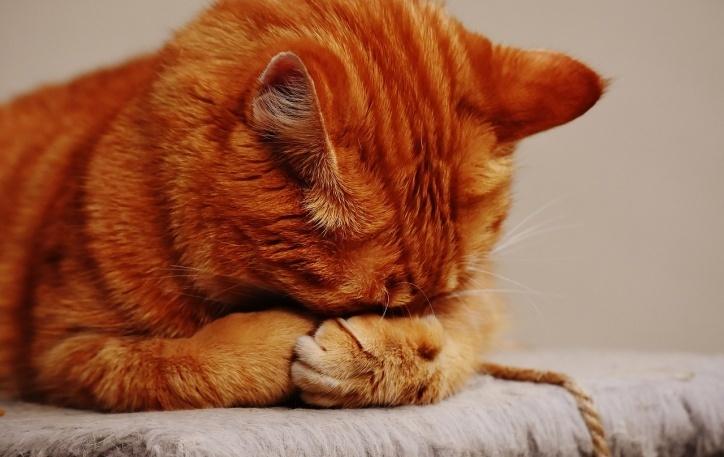 Препарат Анотен как эффективное средство для устранения стресса и тревоги у кошек и собак