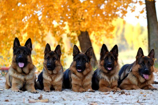 Как выбрать себе породу собаки с фото и названиями