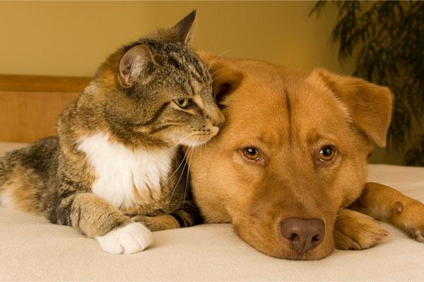 Собаки и кошки могут быть счастливы вместе