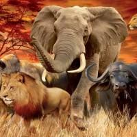 Животные - где узнать о них всё?