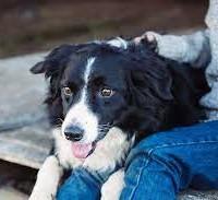 Несколько интересных фактов о собачьей физиологии