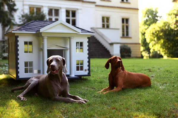 Лучшие породы собак для квартиры и частного дома