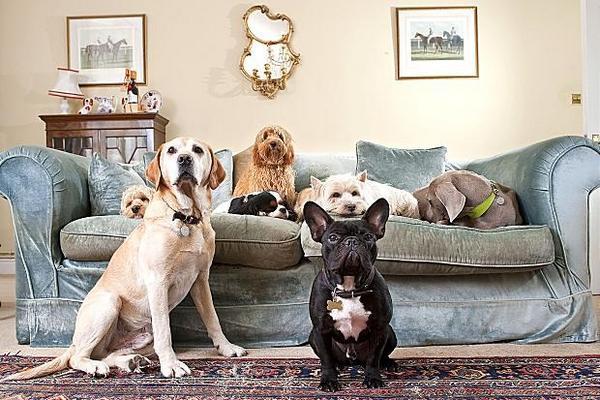 Кот и собака в одном доме: что нужно учесть и предусмотреть?
