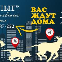 Поиск пропавших животных на Яндекс Кью